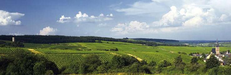 Weil vineyards