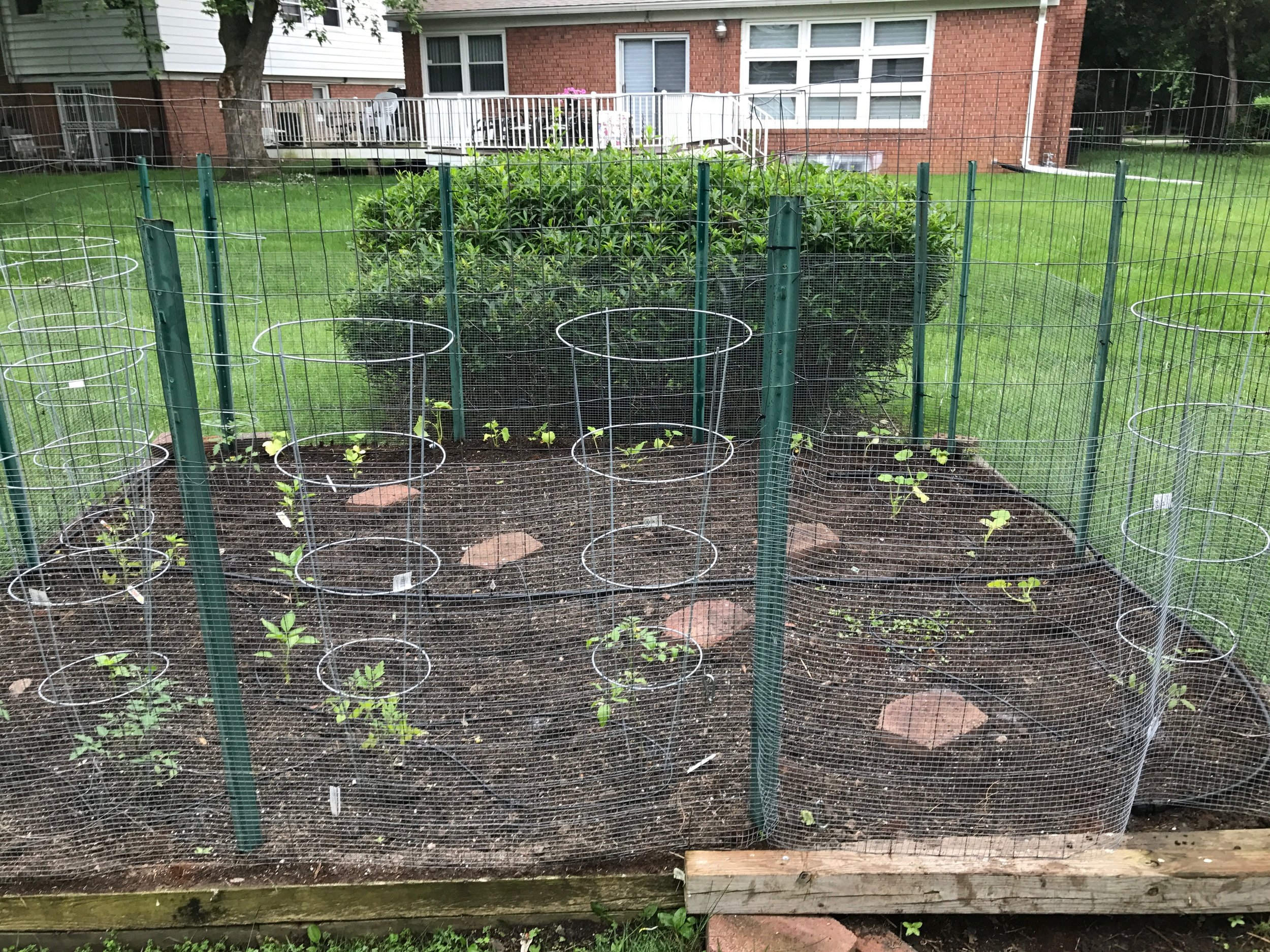 After - fresh planting