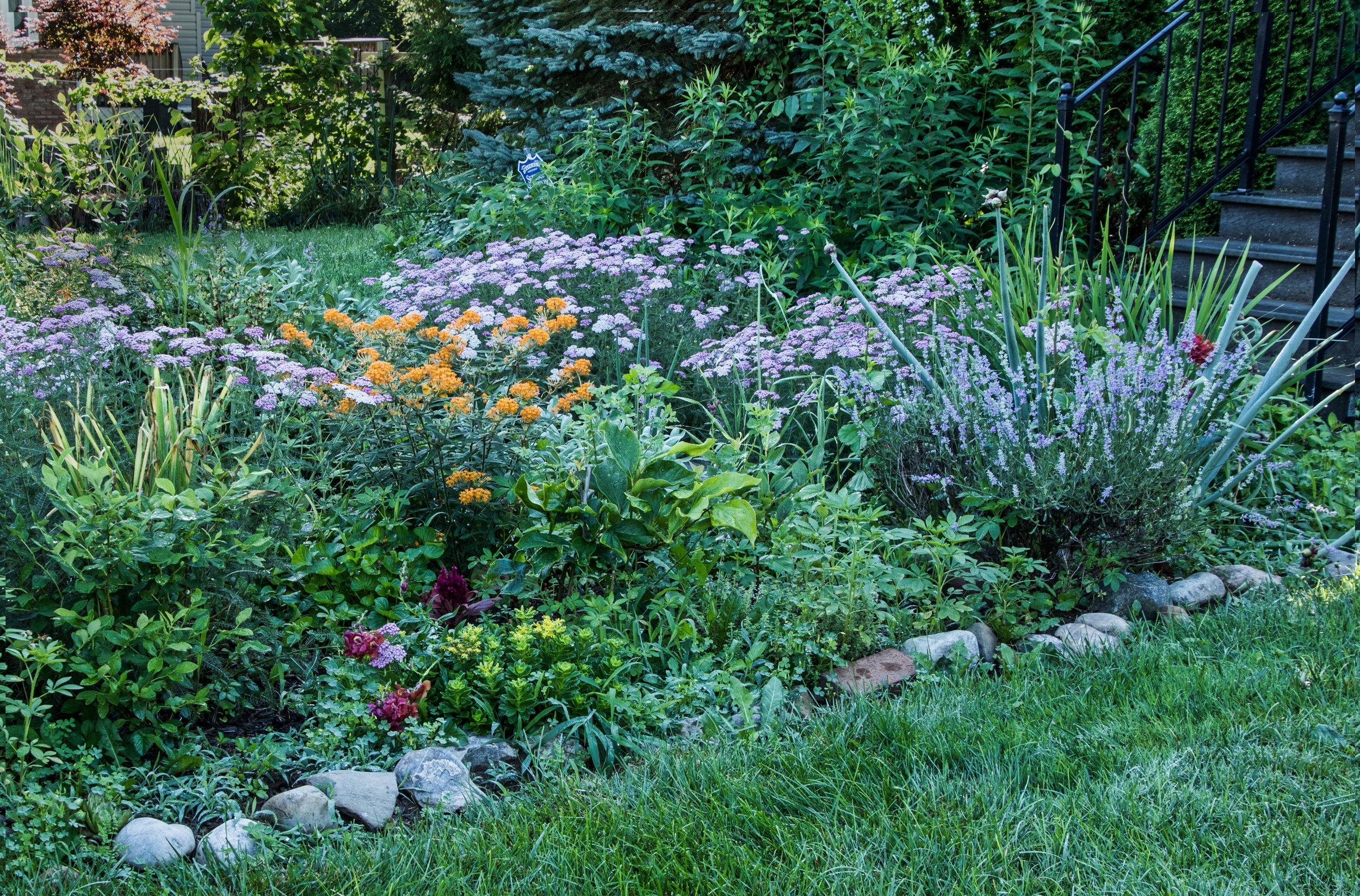 A front yard landscape incorporating edible and ecological plants