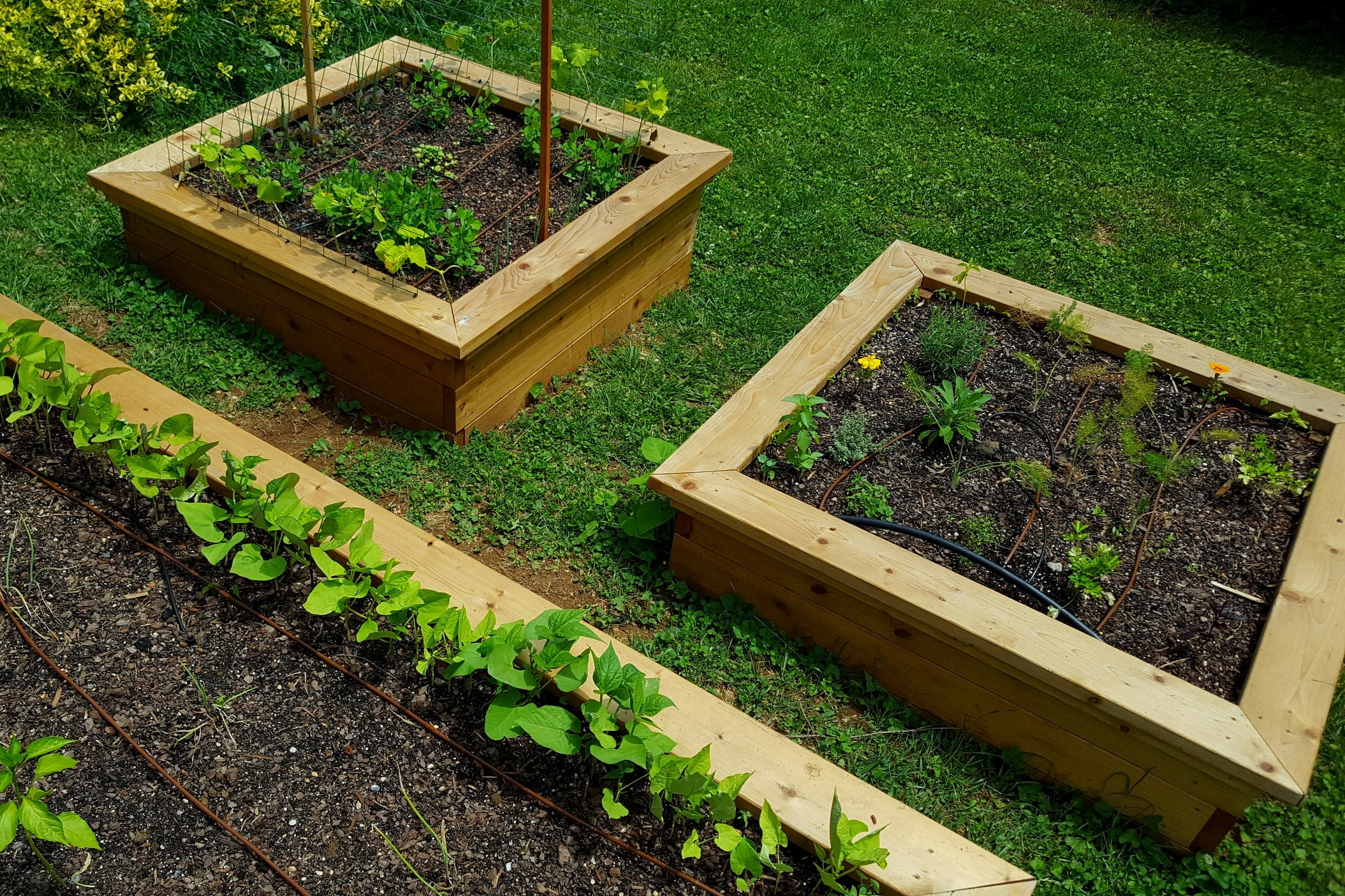 "4' X 4' X 18"" Square raised beds"