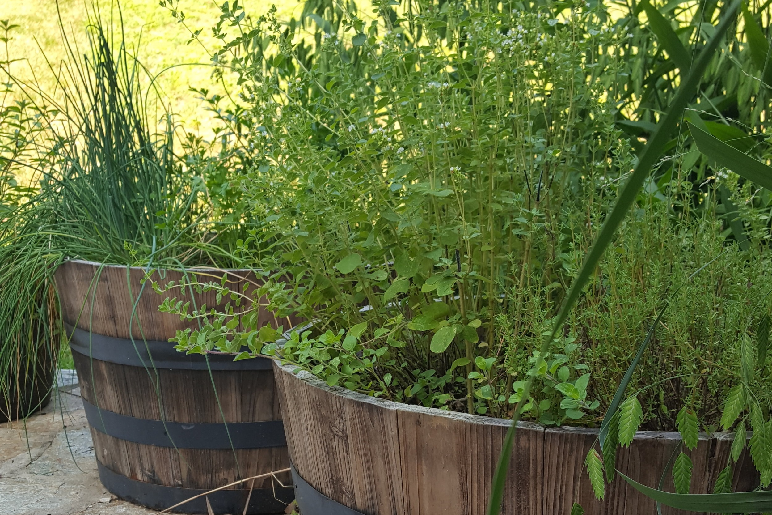 Half Whiskey Barrel - An aesthetic and productive container good for a variety of annual crops or several different culinary herbs.