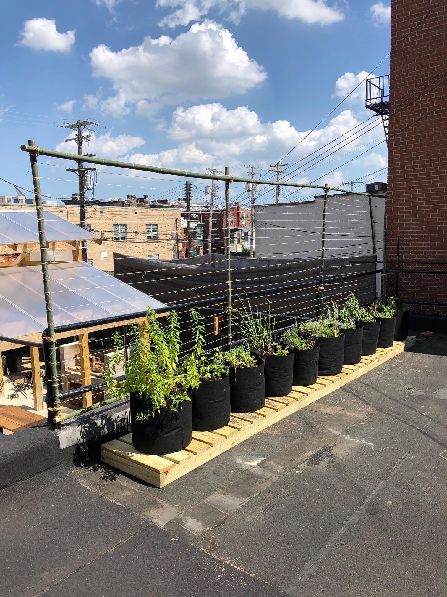 Larder - Fresh Planting