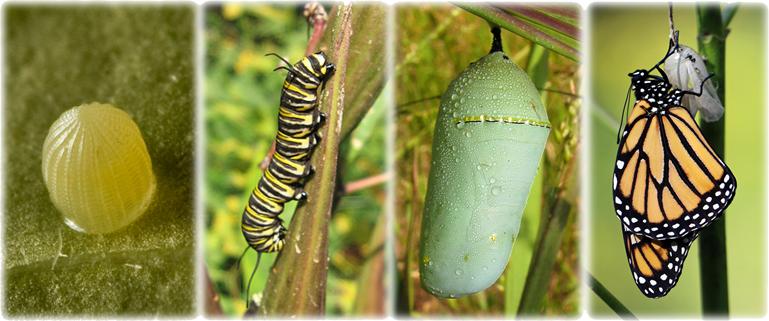 http://dnr.maryland.gov/wildlife/Pages/plants_wildlife/monarch.aspx