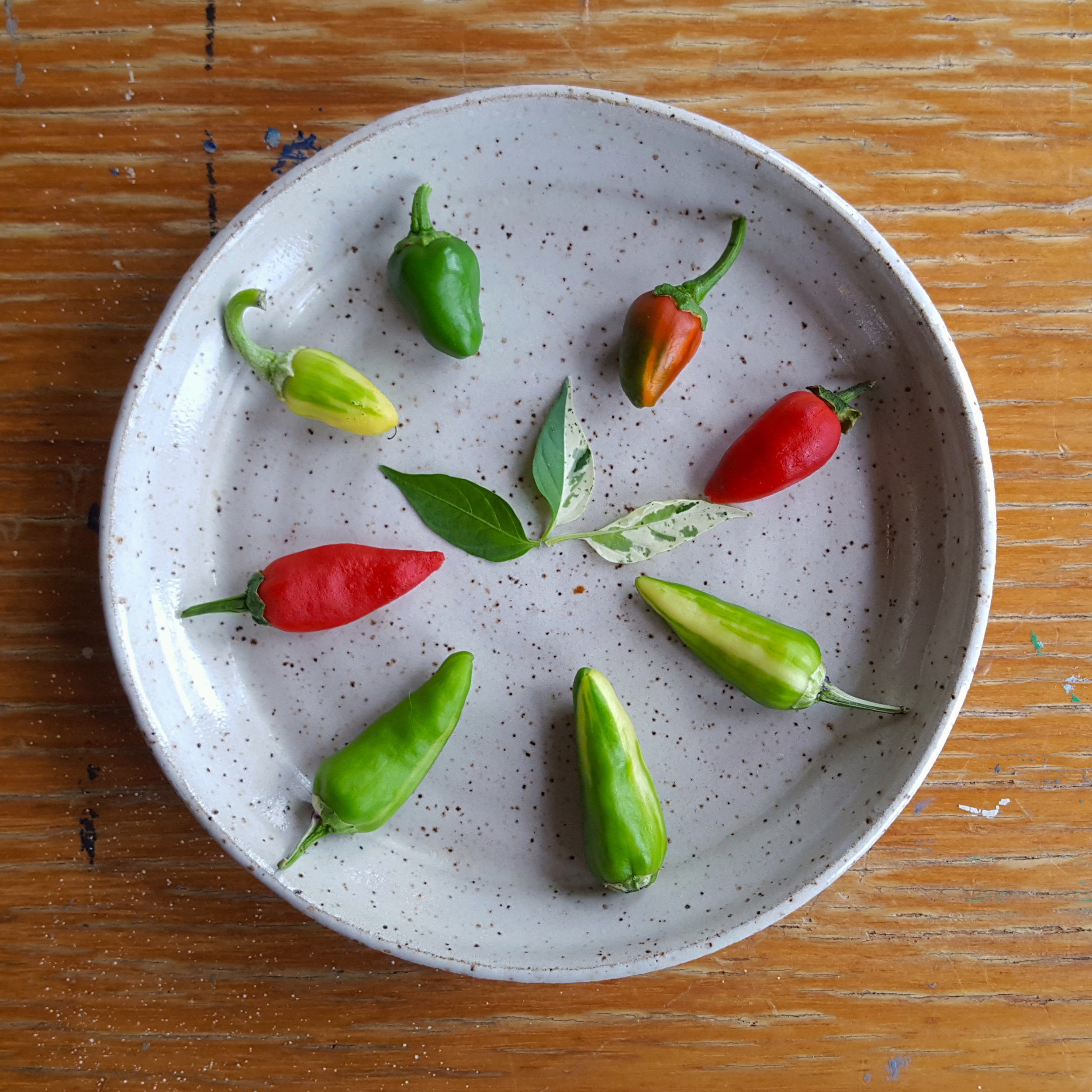 The spectrum of Fish Peppers