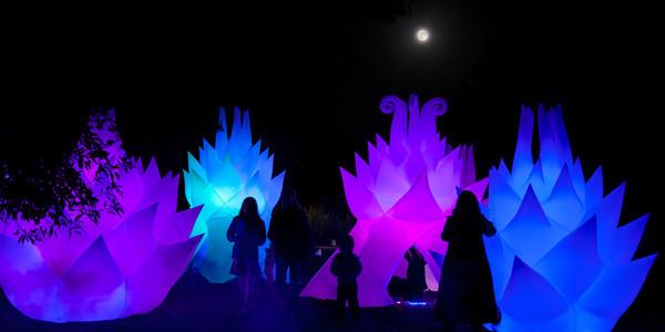 Autumn Lights Festival 2013. Image courtesy of omnisourceimages .