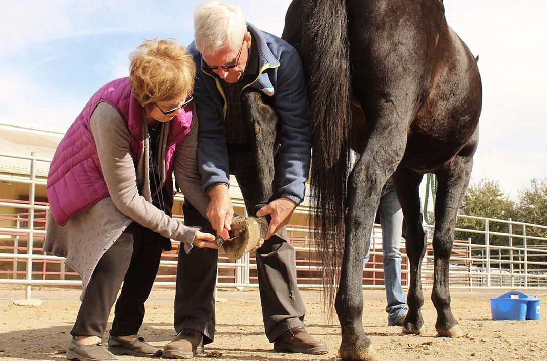 sgd-connected-horse3-blog.jpg