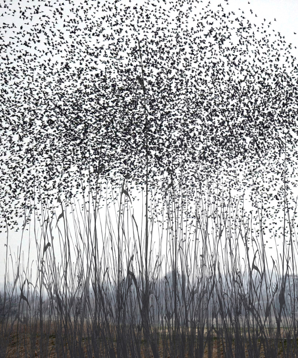 Anna Vogel, Schwarm, 2017, pigment print, 28 x 24 cm