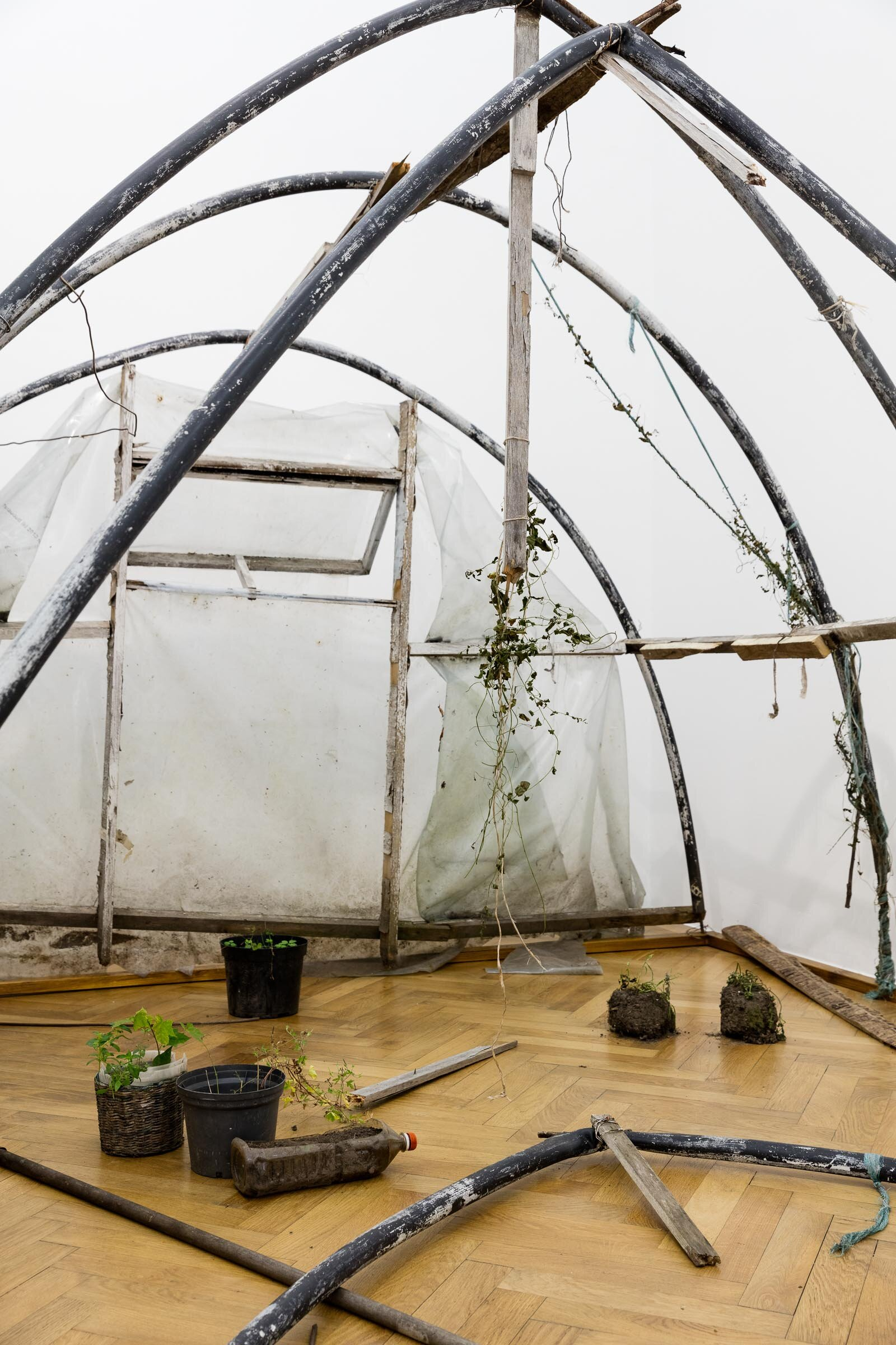Augustas Serapinas, Greenhouse from Užupis (detail), 2019, found glass house structure, found  plants and objects,  400 x 210 x 300 cm, dimensions variable