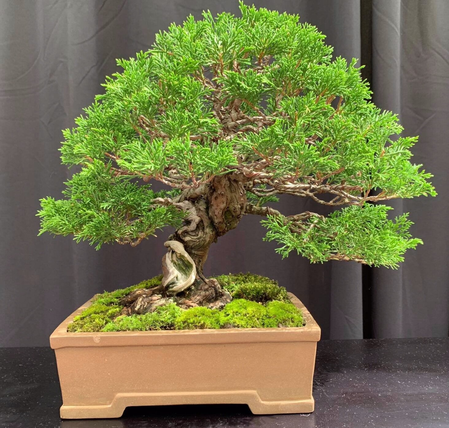 Events Bonsai Society Of Greater St Louis
