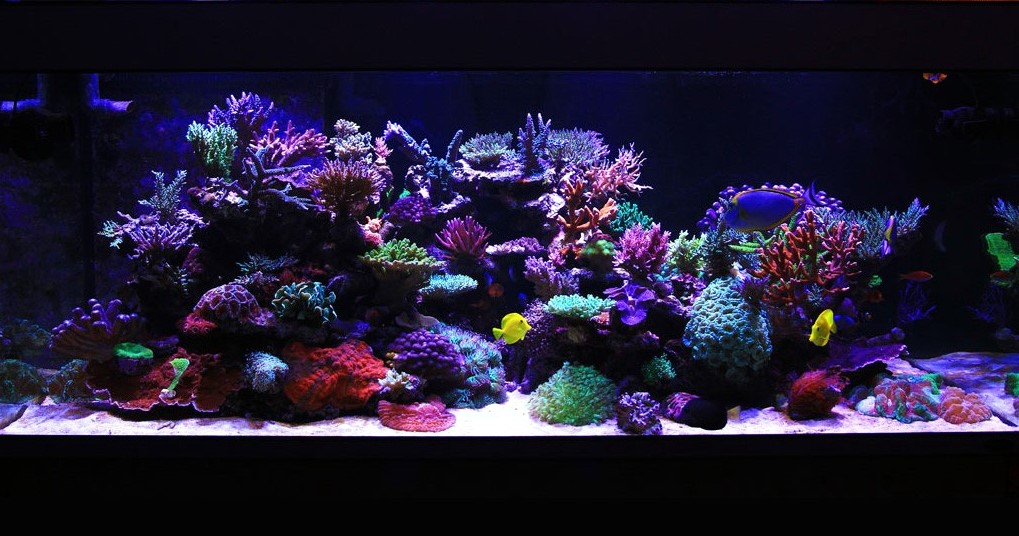 200 Gallon Custom Reef
