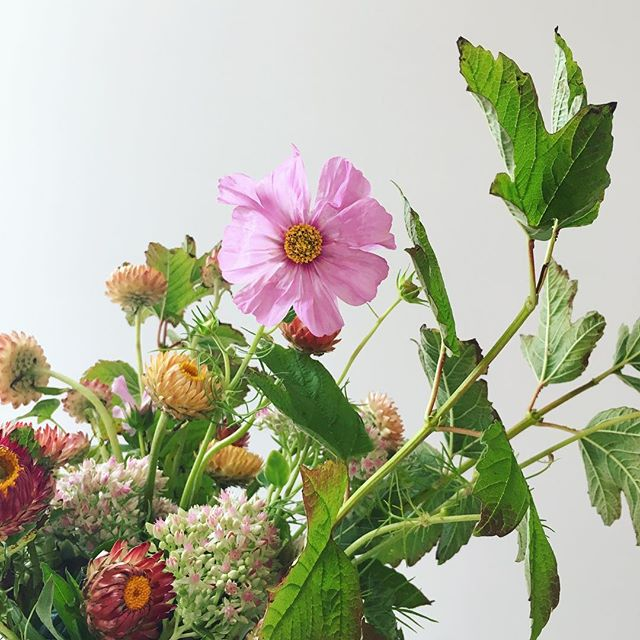 So in love with this weather change. . . . #cosmosflower #flowers #floraldesign #floraldecor #floralarrangement #centerpieces #fallweather #fallfoliage #fallflowers #celebrate #laflorist #imaflorist