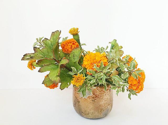 Keeping it simple. . . . #flowerseveryday #celebrate #floraldesign #floralarrangement #centerpieces #floraldecor #autumn🍁 #fallfoliage #marigolds #flowers #laflorist #imaflorist #losangelesflorist