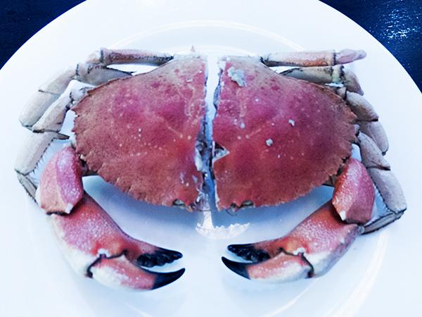 crab_4_web.jpg