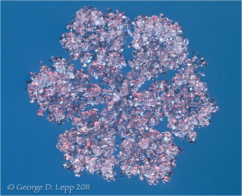 Snowflake coated in rime ice, Colorado. © George D. Lepp 2011 Z-SN-FL-0034