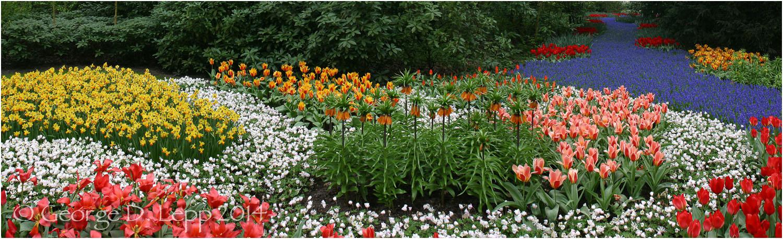 Tulips, Holland. © George D. Lepp 2014 PG-TU-0016