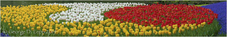 Tulips, Holland. © George D. Lepp 2014 PG-TU-0163