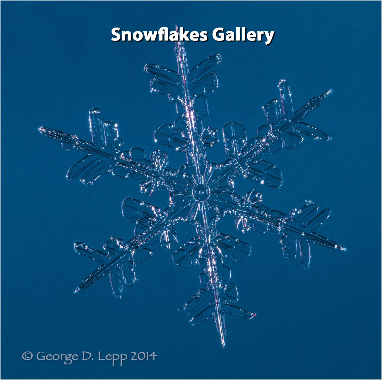 Snowflake crystal at 8X in camera magnification.