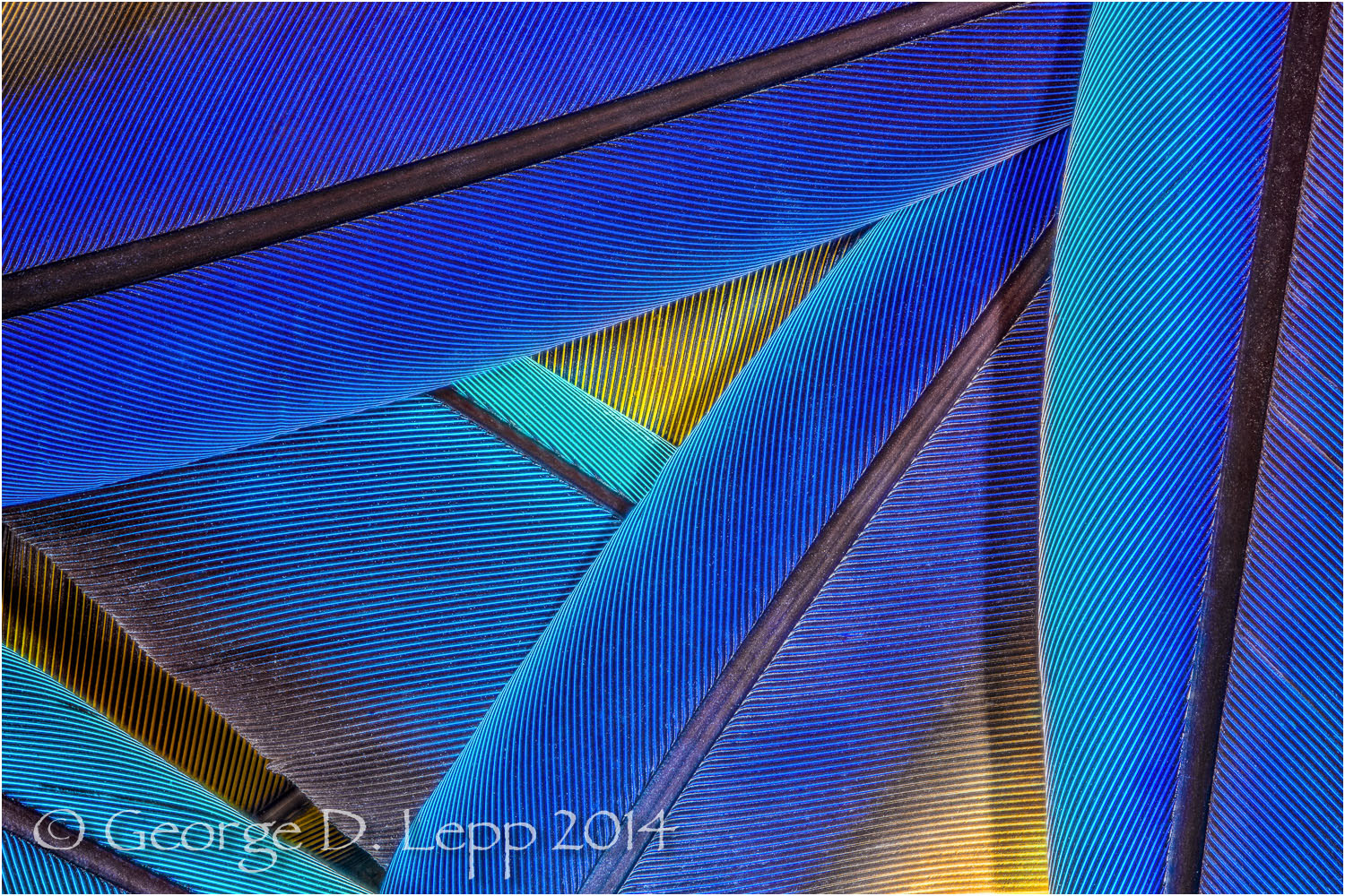 Parrot feathers. © George D. Lepp 2014  B-FE-MA-0002