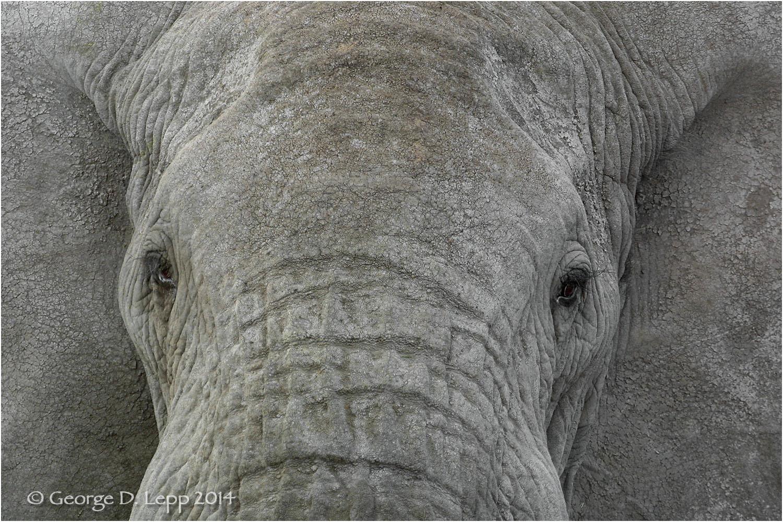Elephants in Botswana. © George D. Lepp 2010 M-EP-AF-0016