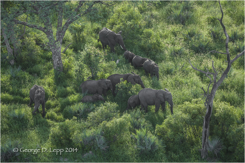 Elephants in Botswana. © George D. Lepp 2010 M-EP-AF-0053