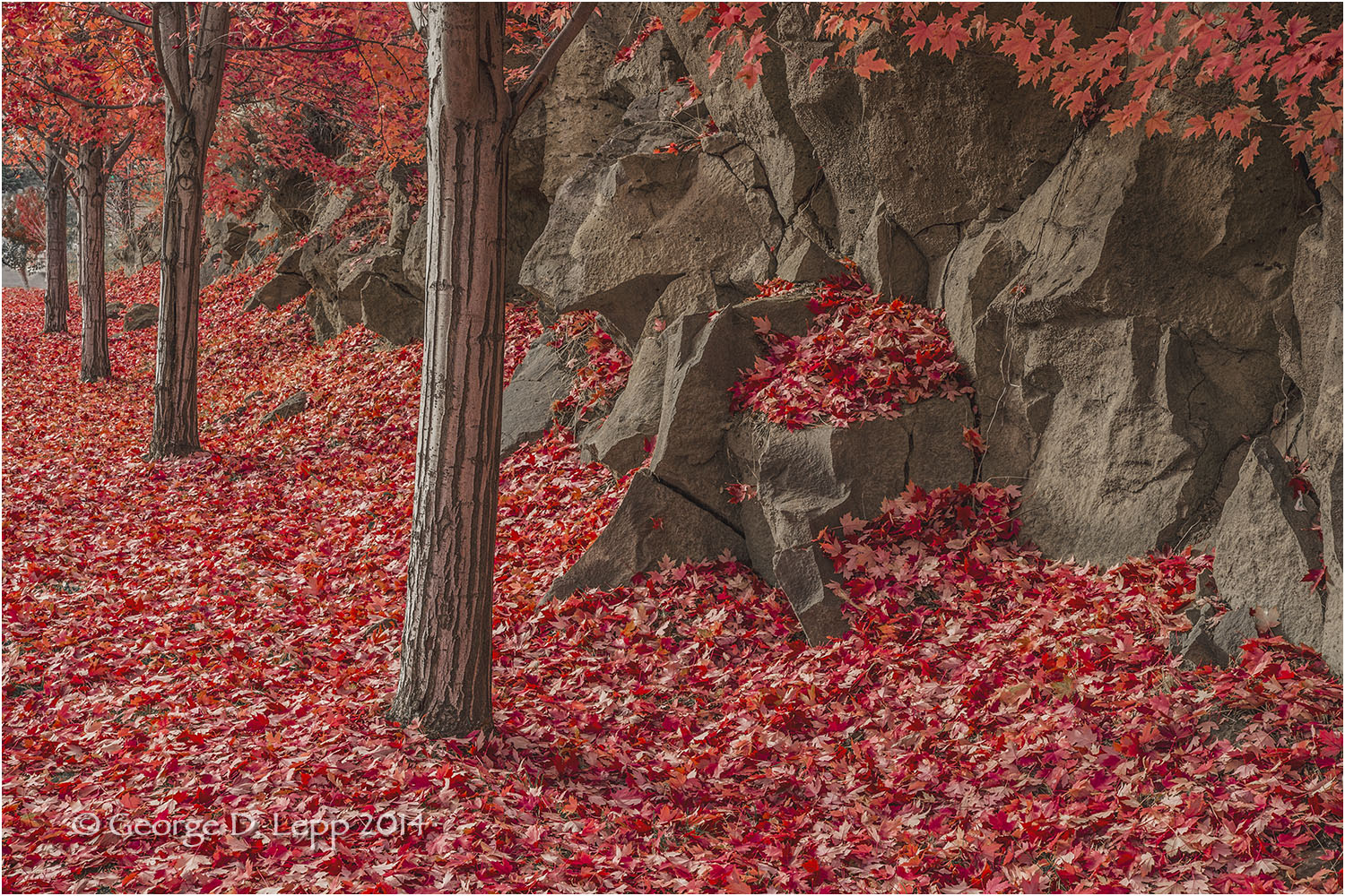 Fall colors along a Bend, OR, street. © George D. Lepp 2012 LO-CE-BE-0008