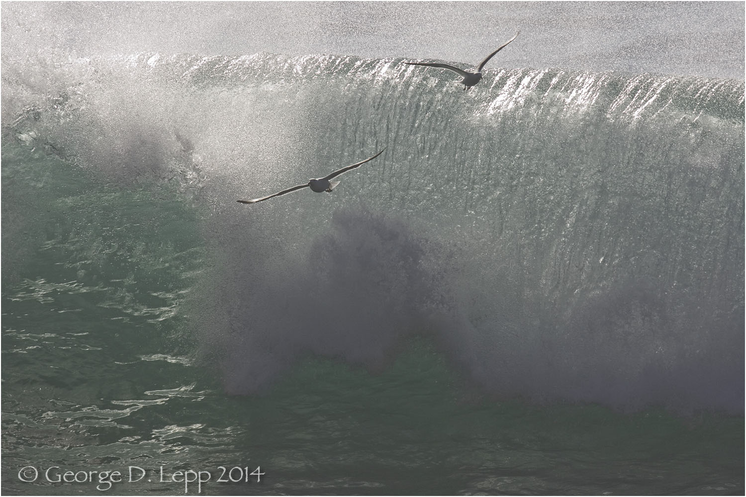Gulls skimming the waves. © George D. Lepp 2014 LC-CC-CG-0001