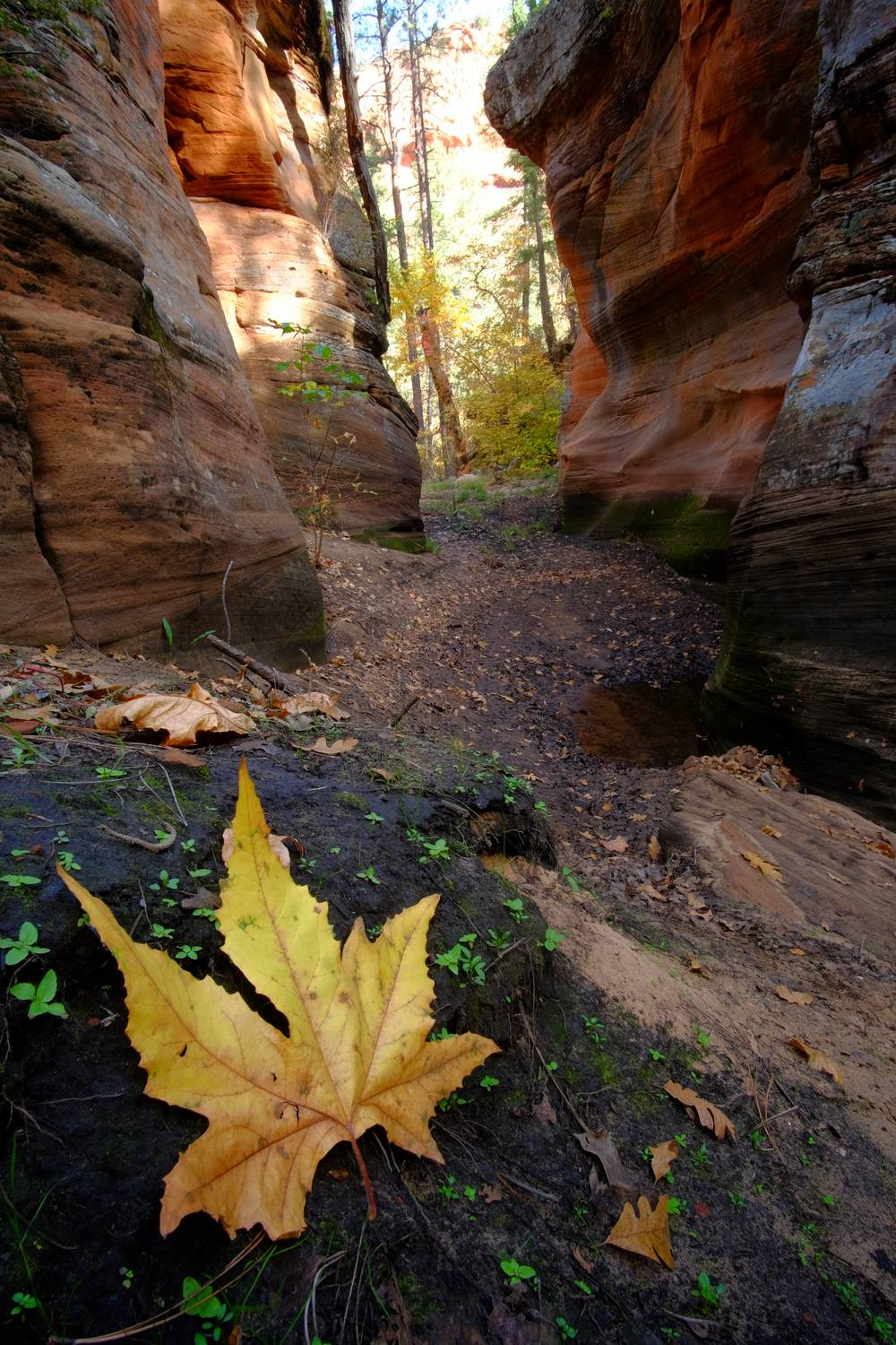 At 3 miles I choose to enter the canyon and explore rather than following the trail, this proved to be quite fruitful
