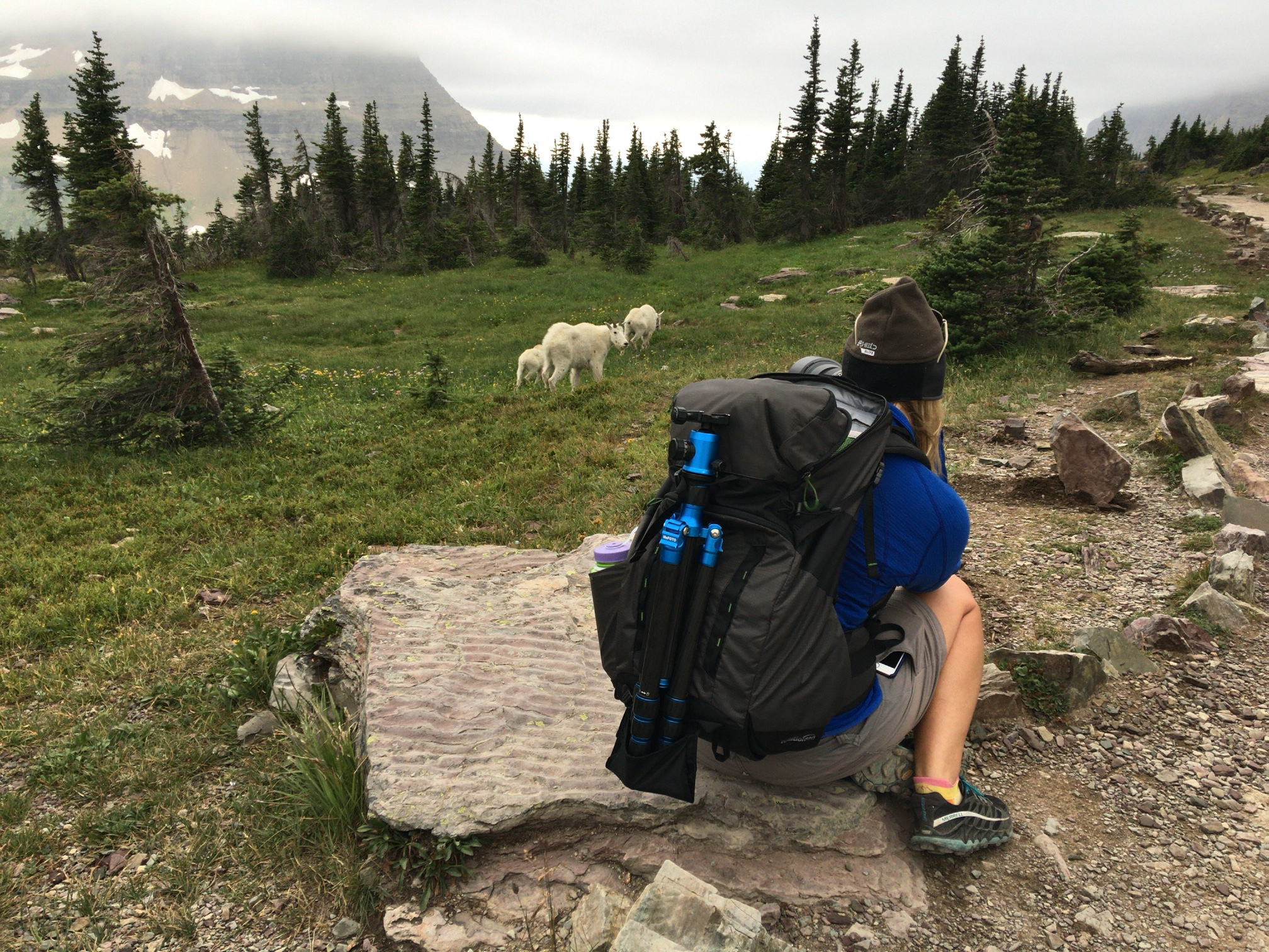 Photographing the mountain goats (my favorite thing to do!) near Logan Pass