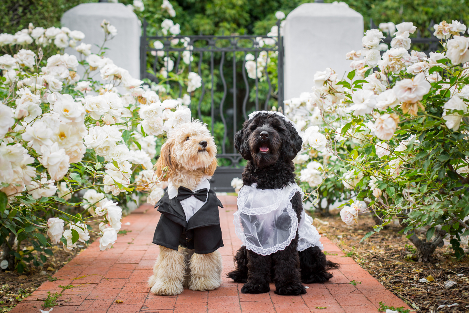 _WebsiteDogs10DogWedding_A3A3888_2_1500.JPG