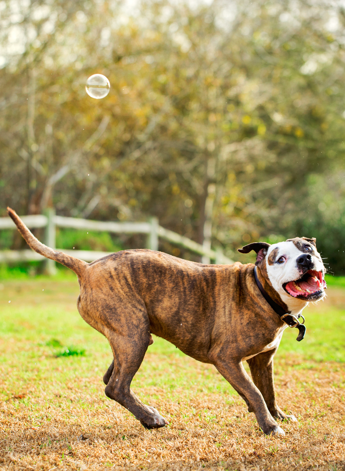 _WebsiteDogs52BusterBubbles_45_1500.JPG