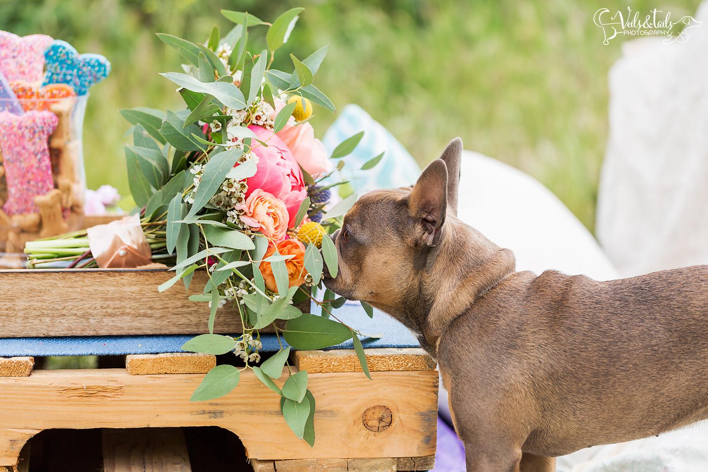 Dog at wedding in Santa Barbara