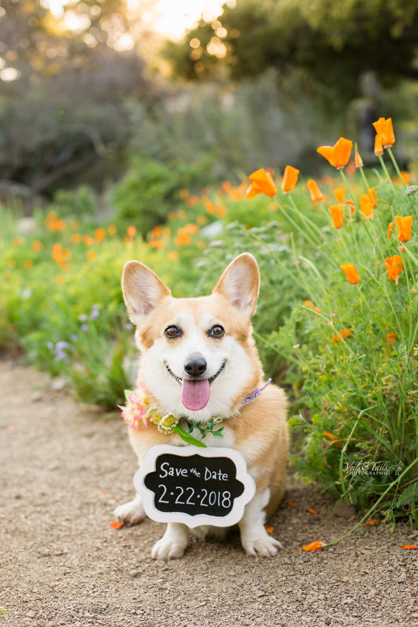 Dog as best man for wedding