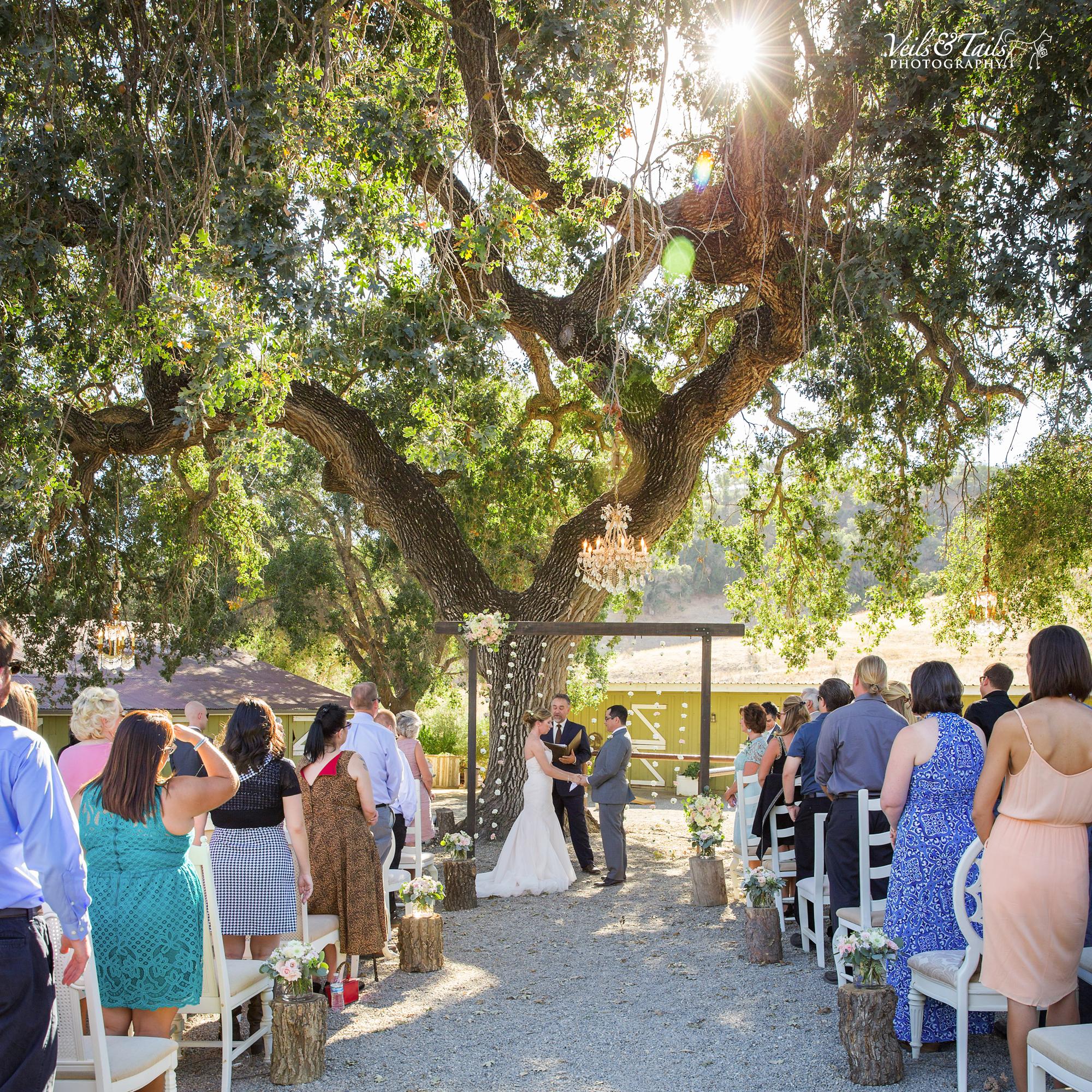 average cost of wedding photographer in california