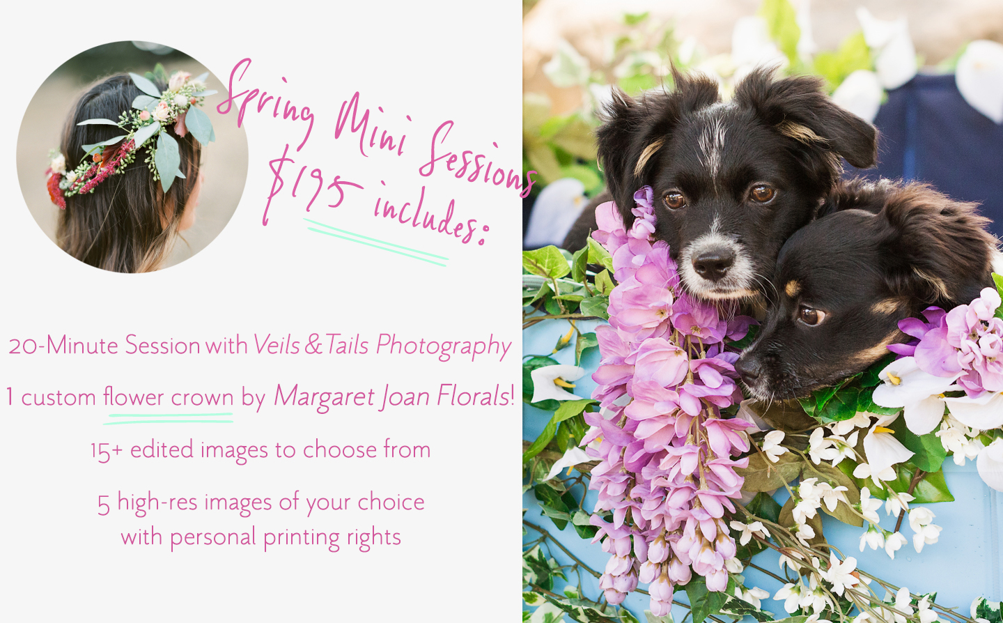 Santa Barbara Spring Mini Photo Sessions - Pet Sessions, Family Sessions or Couples Sessions, including a flower crown or floral collar from Margaret Joan Florals!