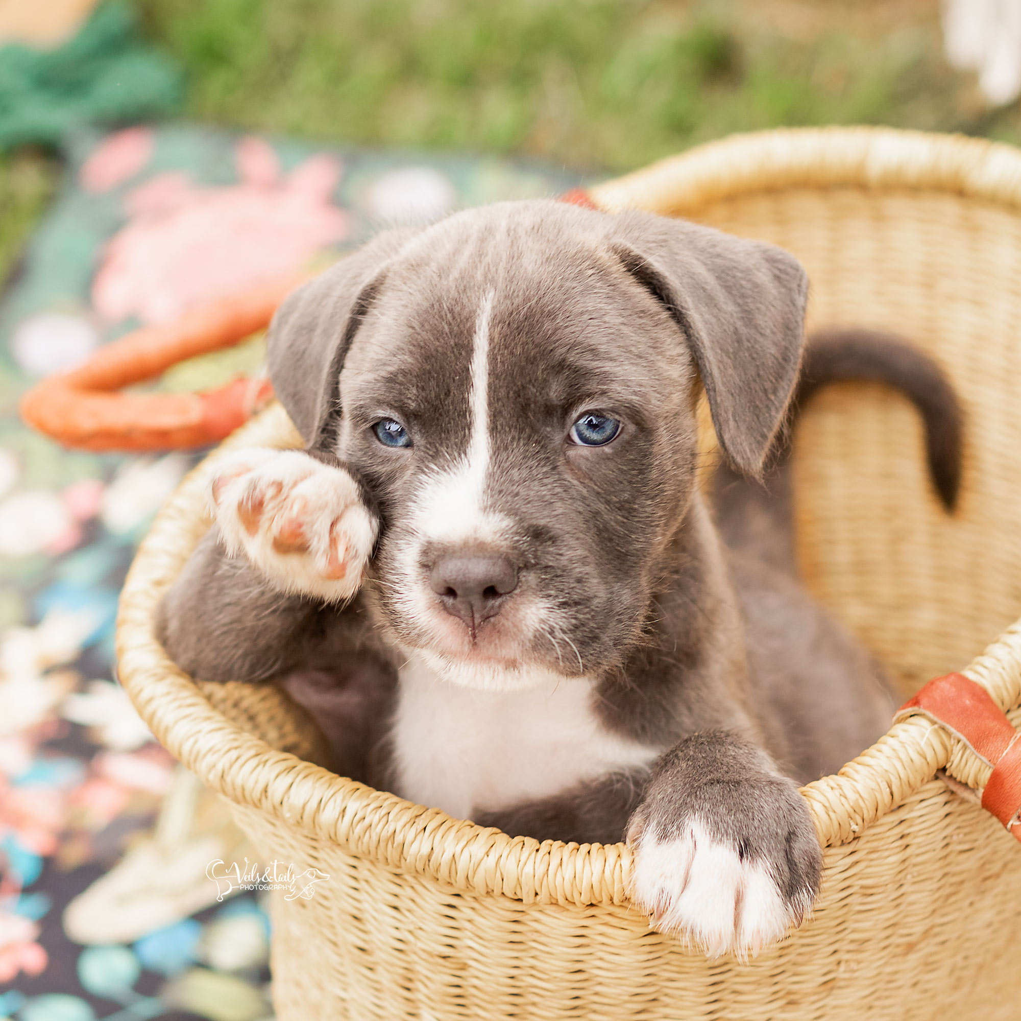 Santa Barbara Pet Photographer Puppy