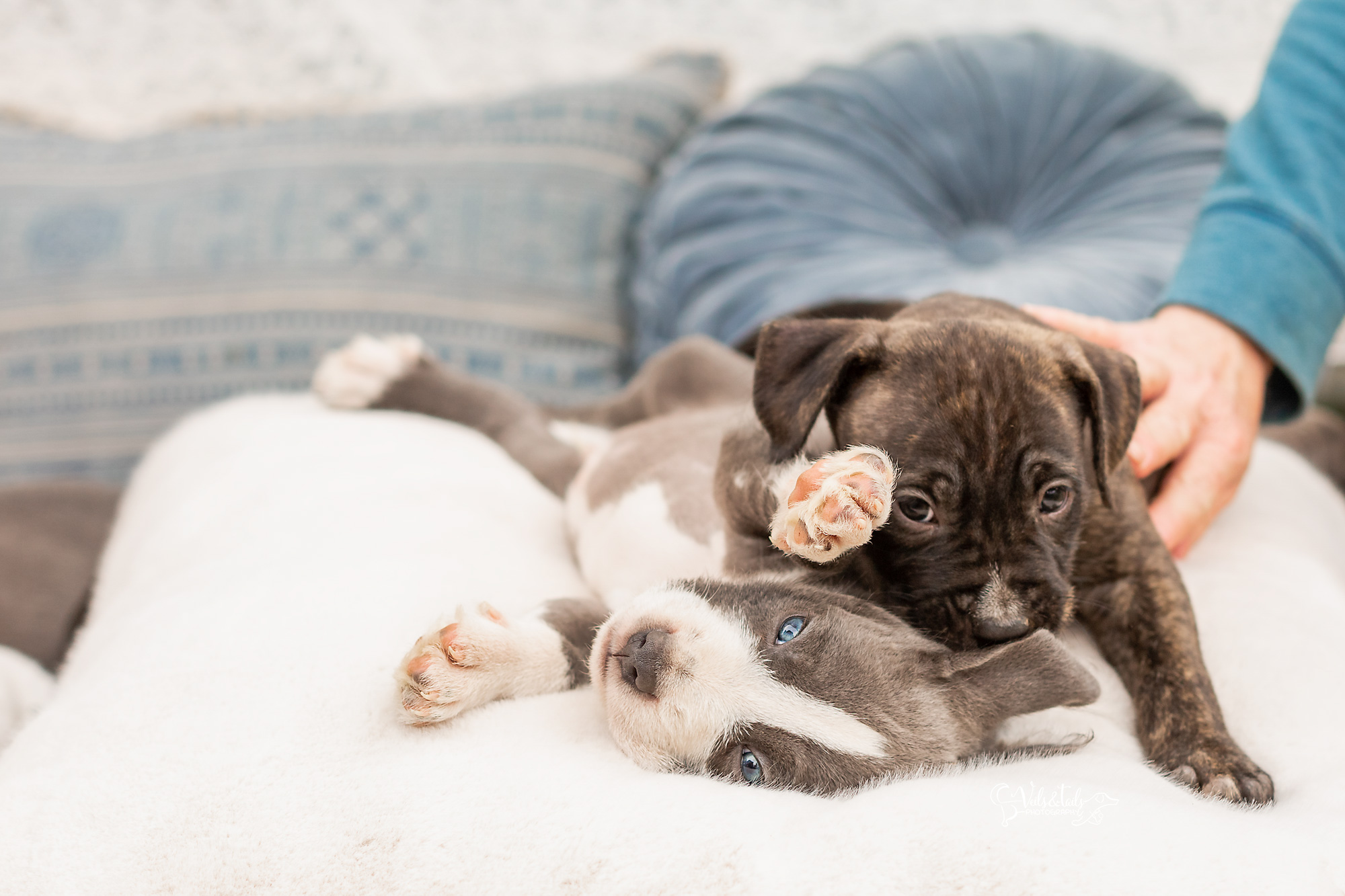 Santa Barbara Pet Photographer Puppies