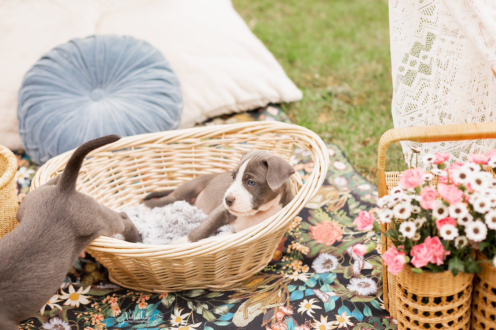 Santa Barbara Pet Photographer Picnic Design
