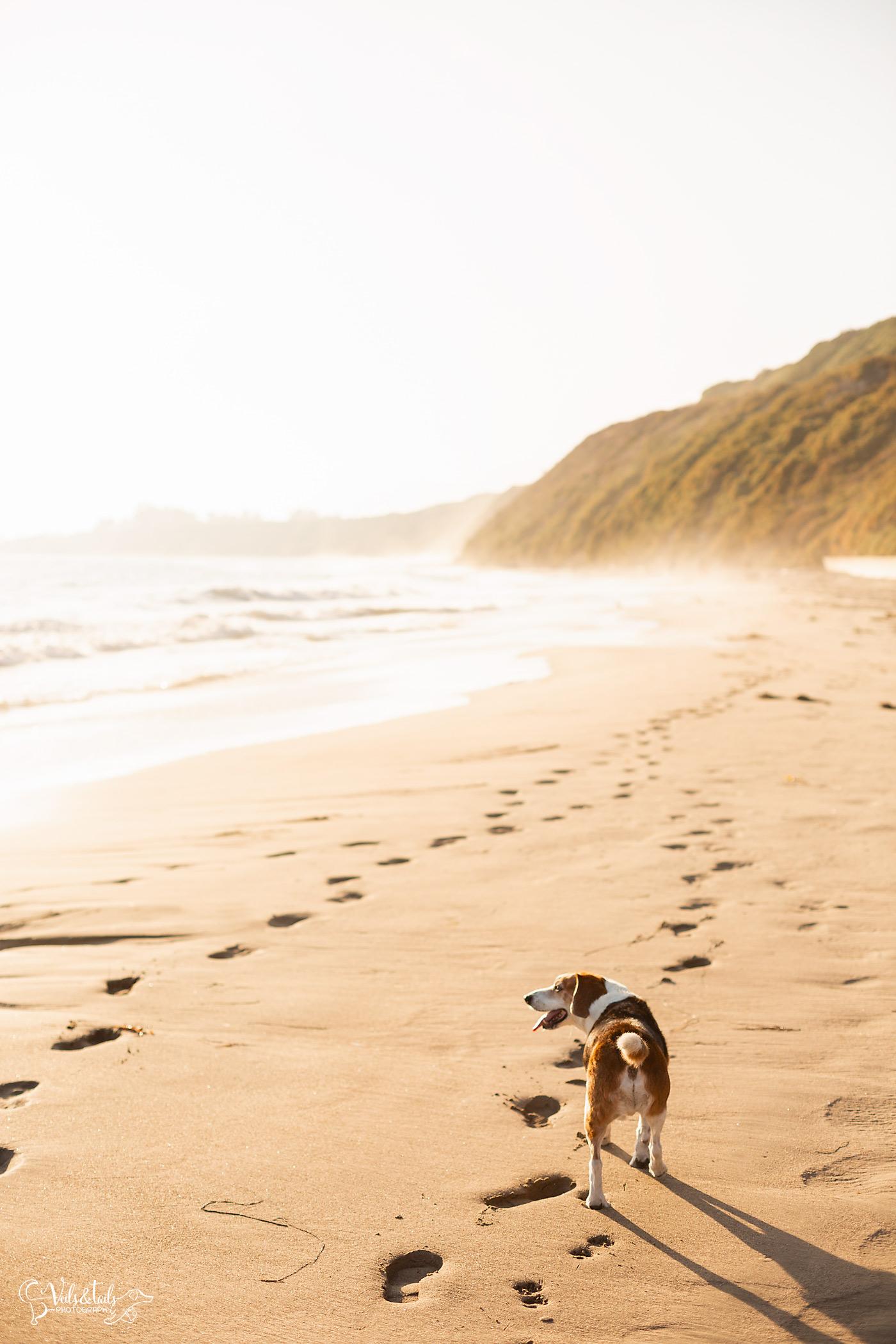 santa barbara pet photography session on the beach