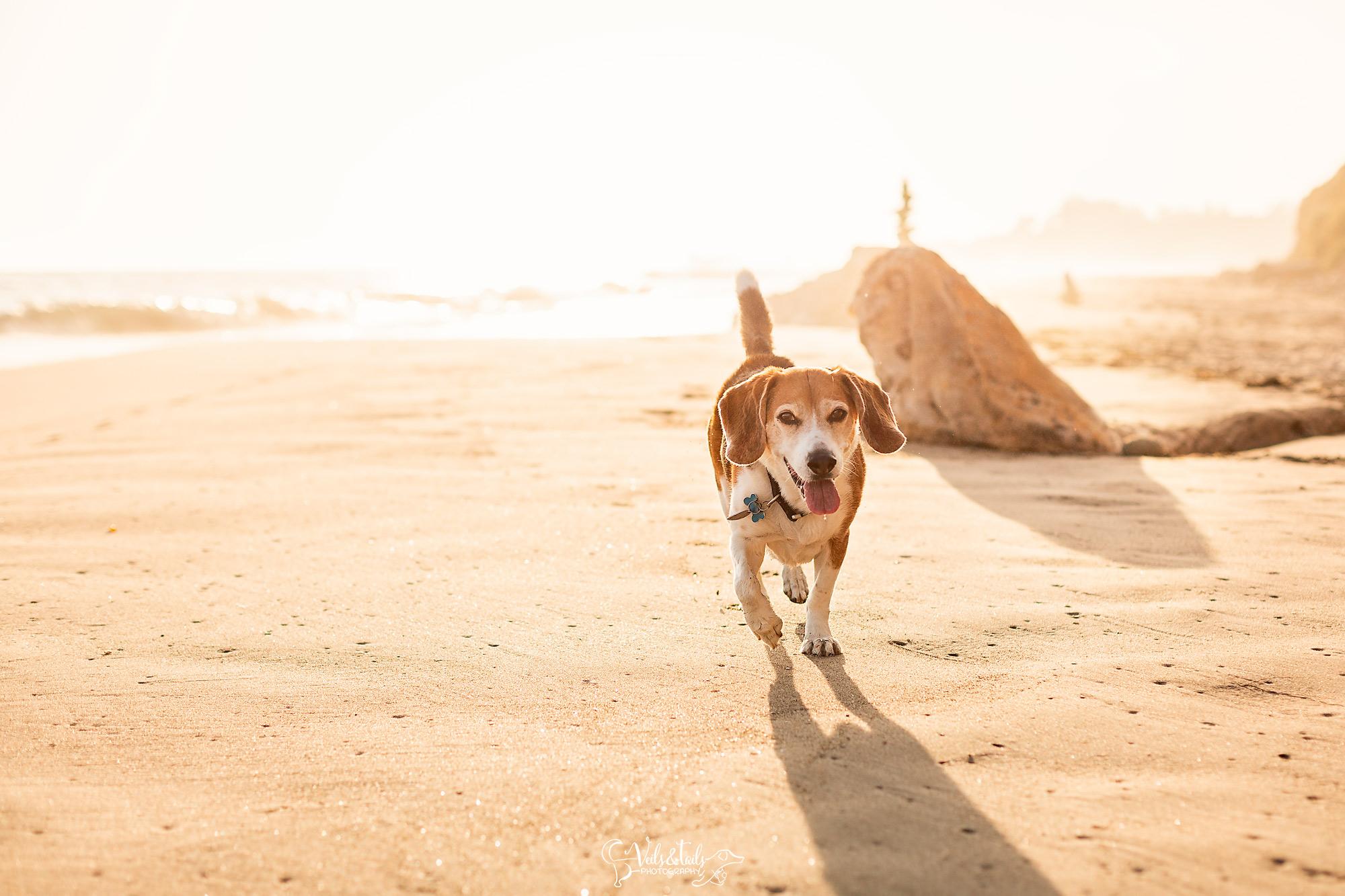 rincon beach pet photographer
