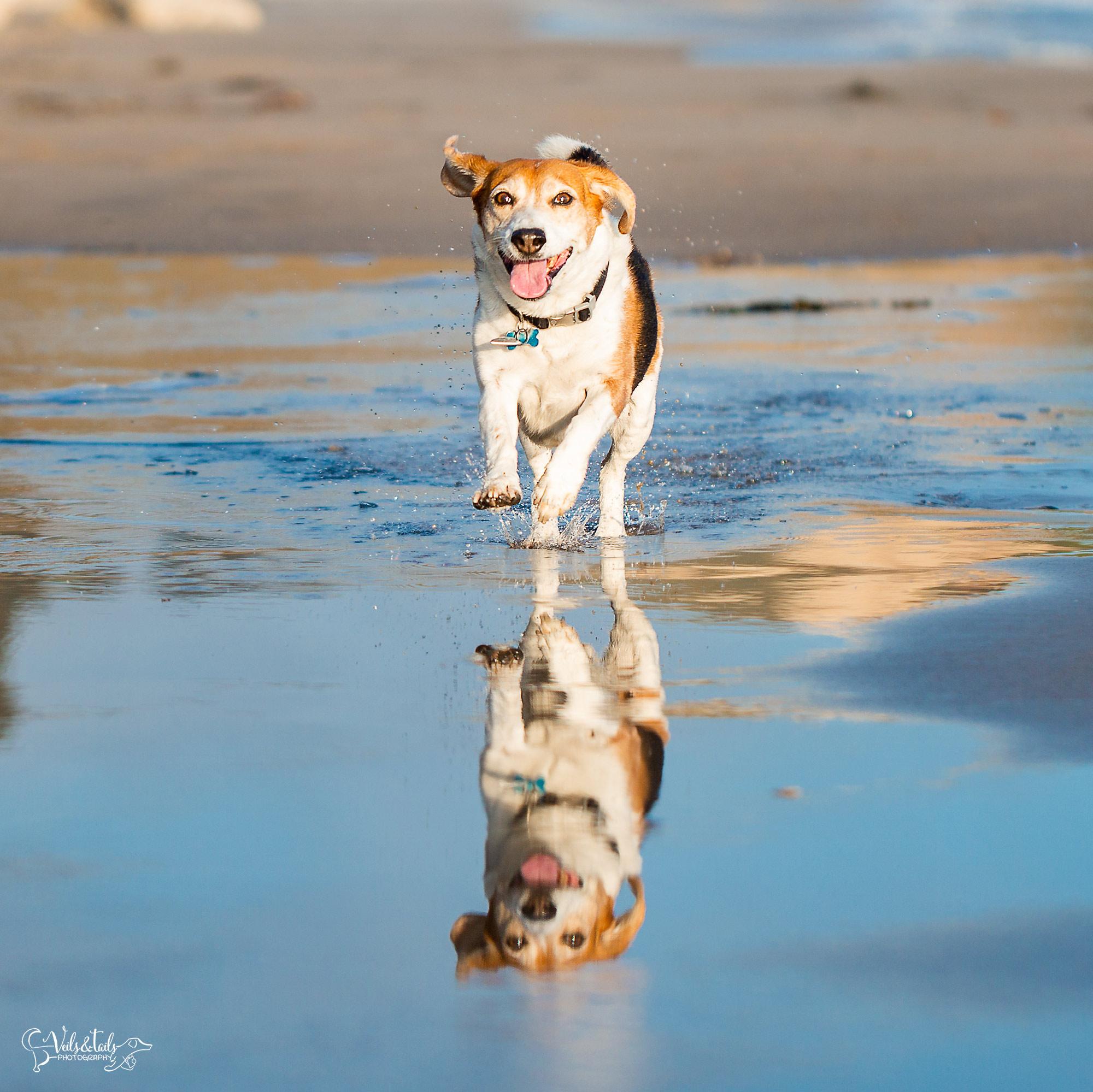 south coast santa barbara pet photographer beach