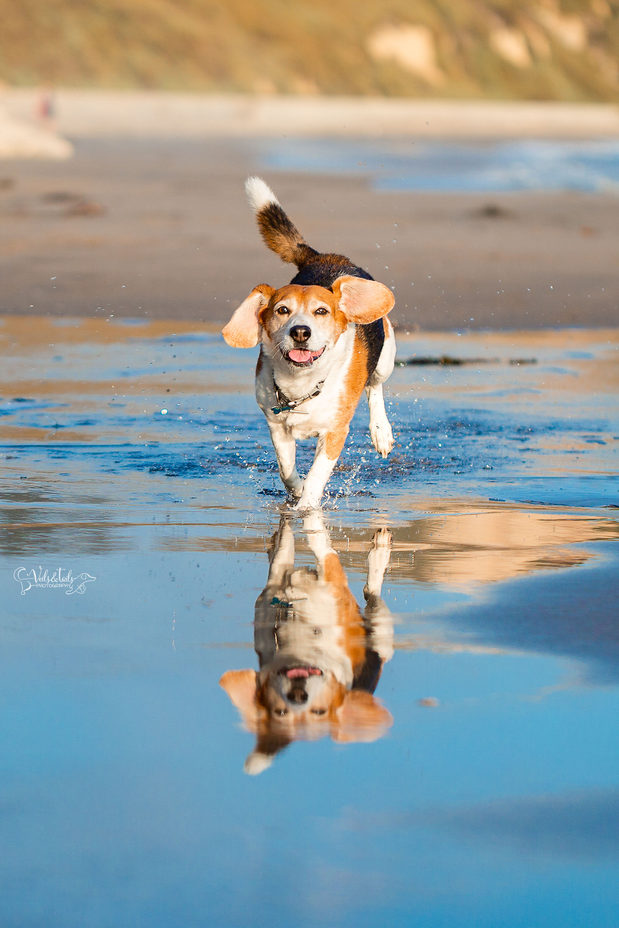 beach pet photography south coast photographer