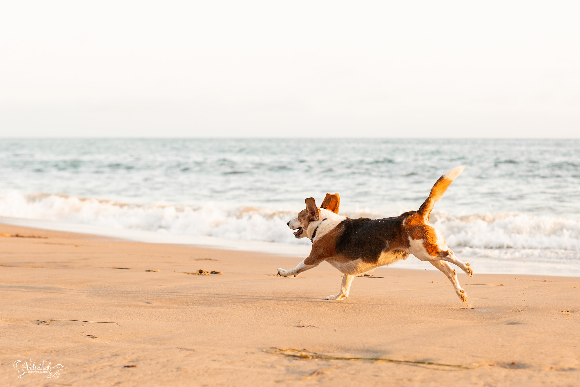 santa barbara beach photography