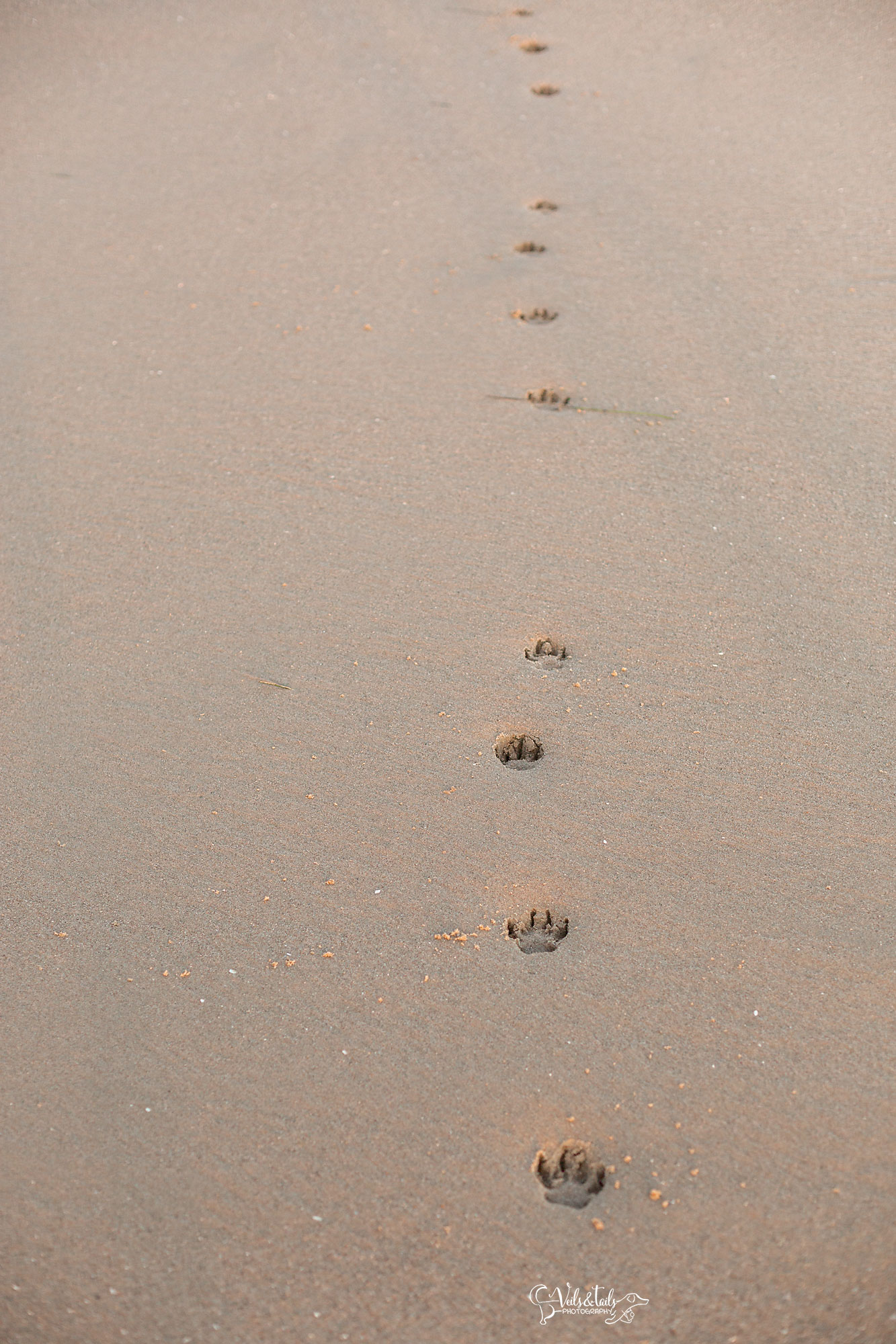 paw prints on your heart, santa barbara pet photography
