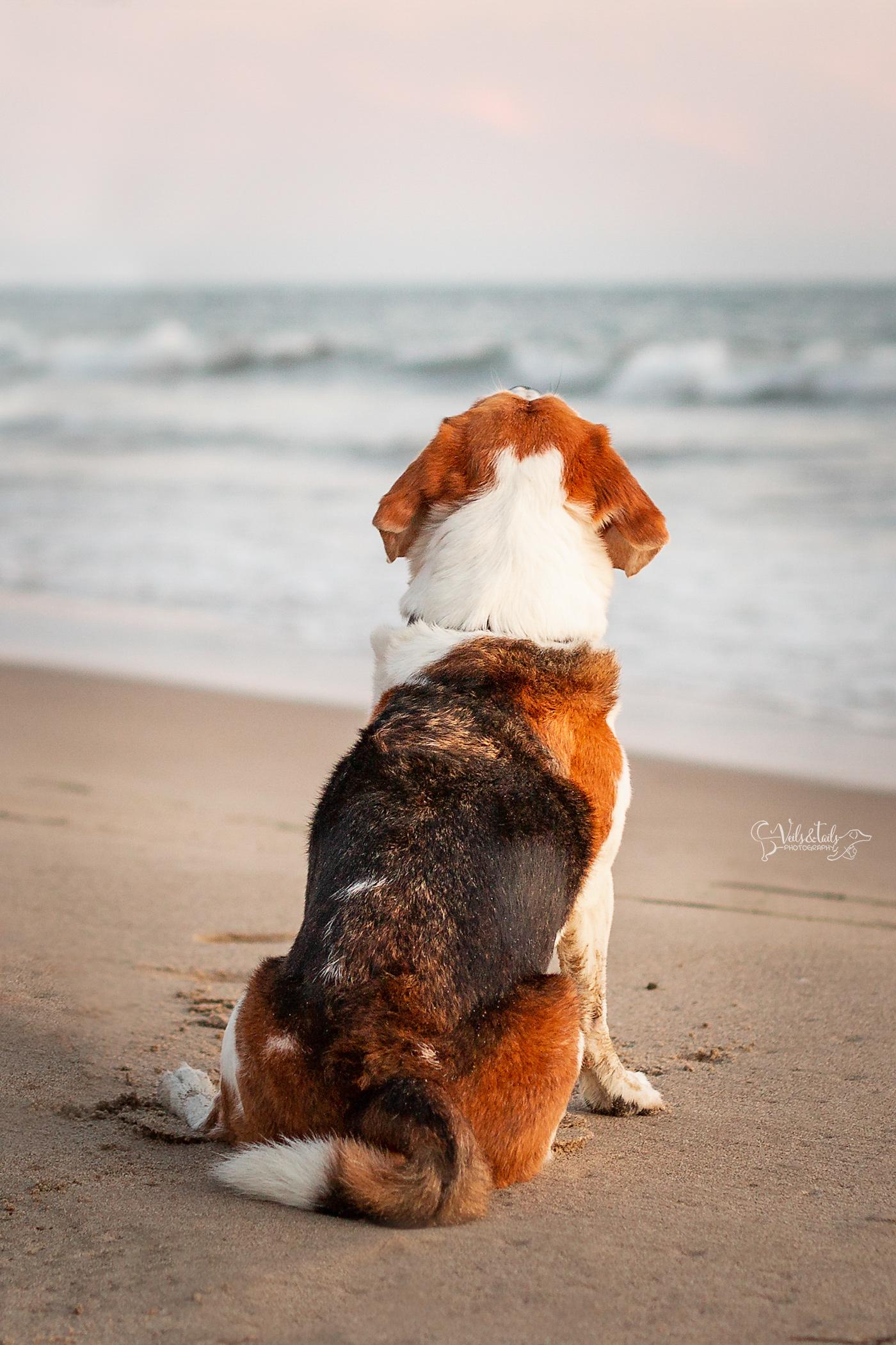 dog details santa barbara photographer carpinteria