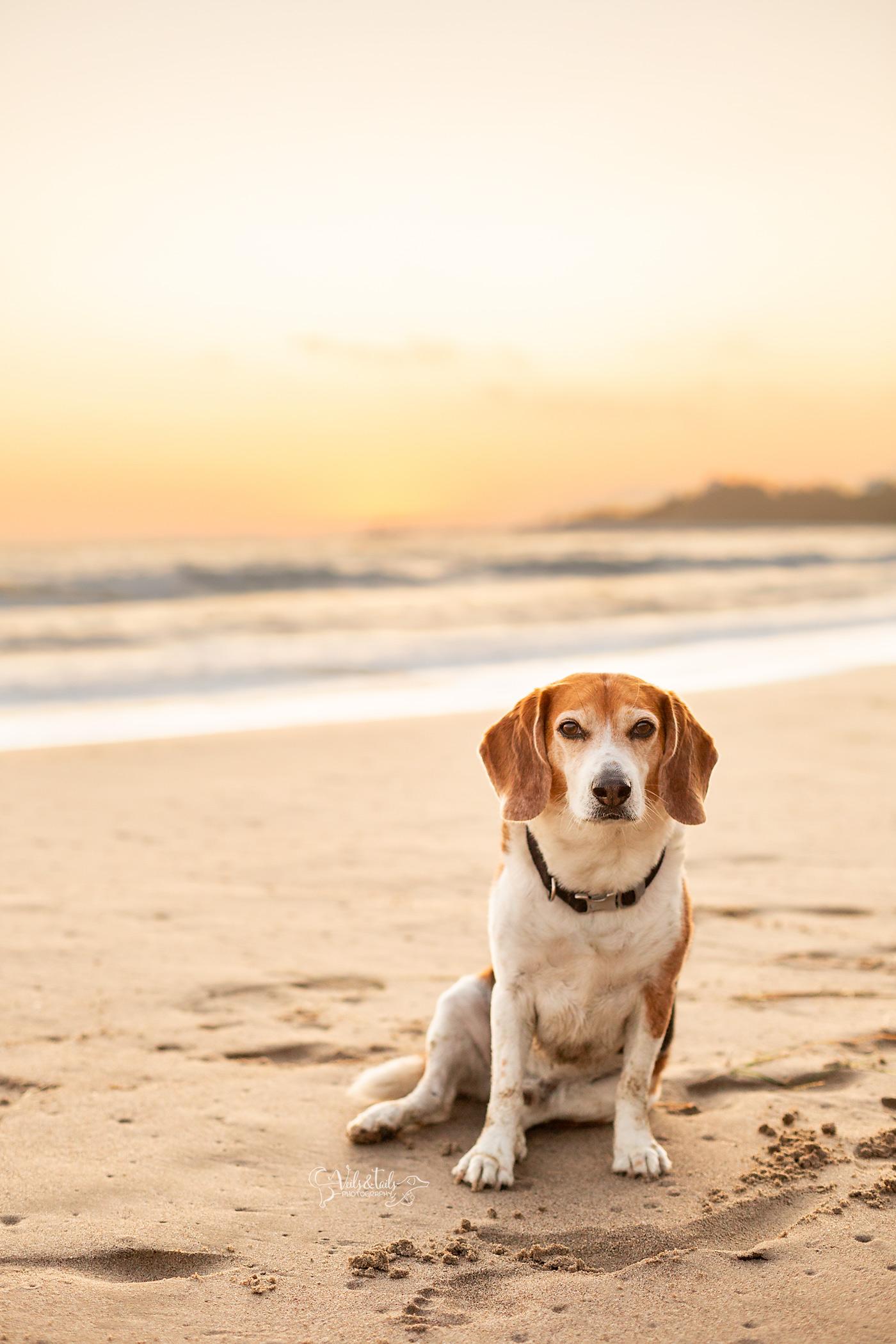goleta photographer beach sunset dog