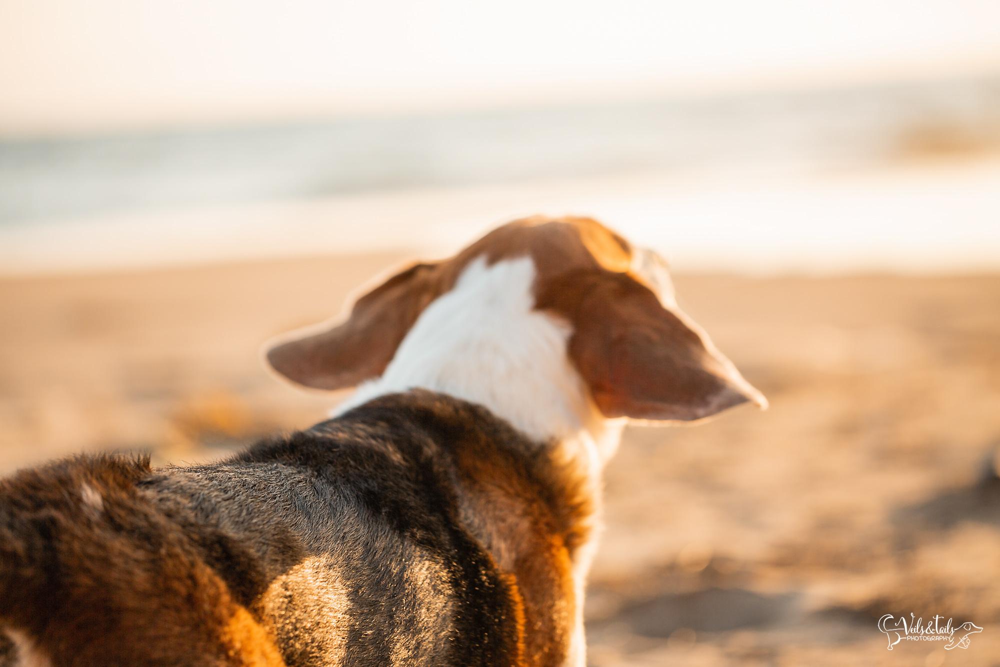 Santa Barbara pet photography session at Rincon Beach