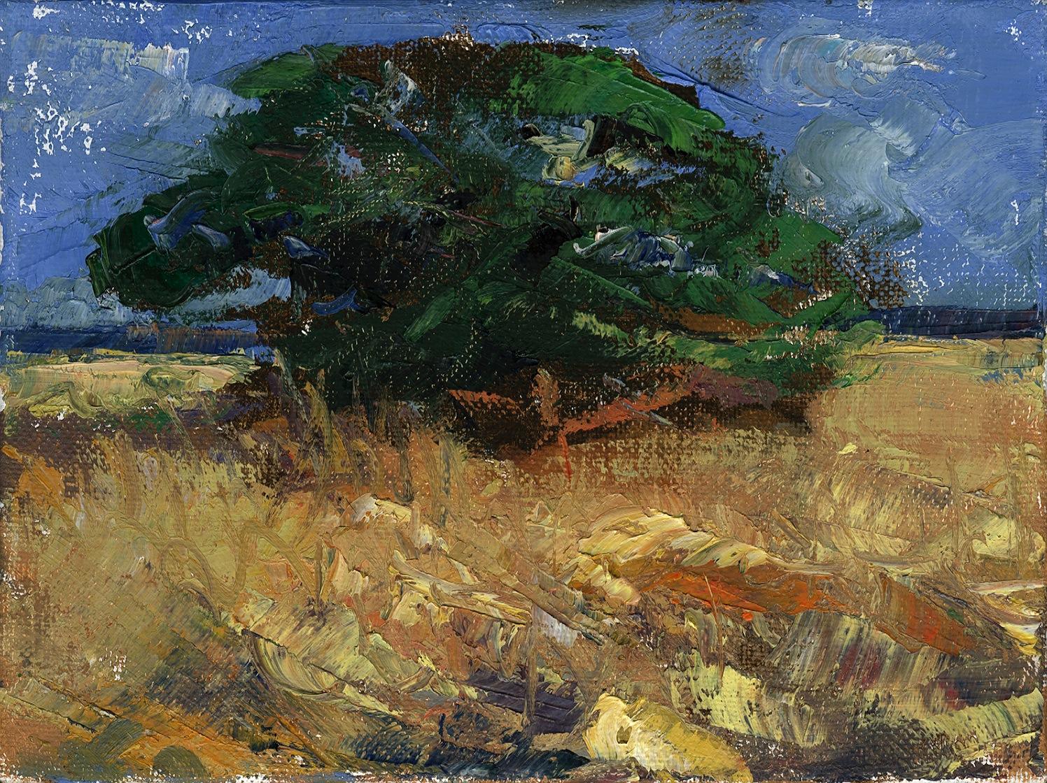 Myakka Tree