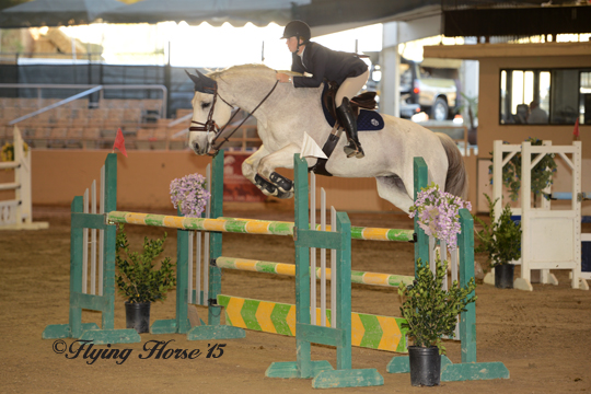 Stephanie's Kingston in the 1.25m Jumpers