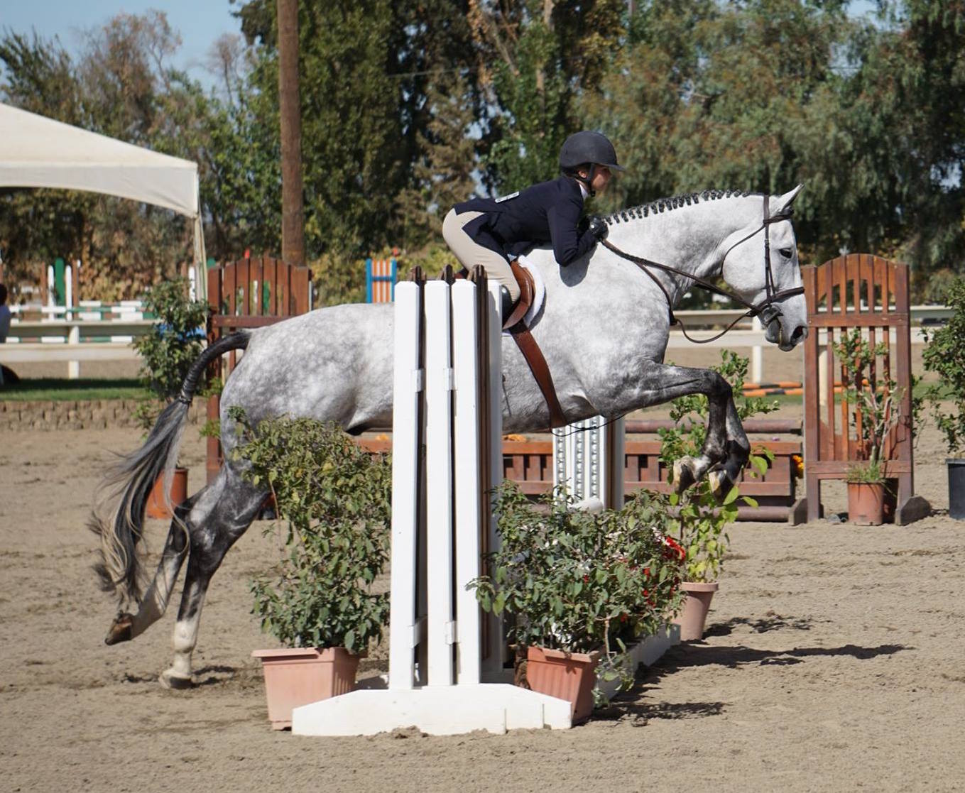 """Testimonials:  """" I recommend Sarah Phaklides who teaches [my daughter]. She's awesome. She is very encouraging yet strict, and really stresses the importance of discipline, patience, and appreciation in horse back riding and life!!""""  Robin N. Happy Mom    """"My off-track thoroughbred has become more balanced, relaxed, and open since we've been training with Sarah in only a few months than he has in a few years with other trainers. His topline development was one of the first things i noticed in the first few weeks, in addition to his overall willingness. As, for me, Sarah's patience and clarity is a godsend! And, I have gained confidence because I have because I a stronger foundation and that has made me a for independent rider and I'm having more fun. Isn't that what its all about?""""  Laura A. My OTTB"""