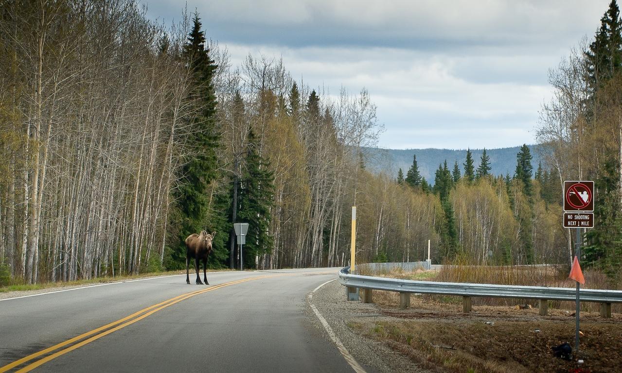 Safe Moose